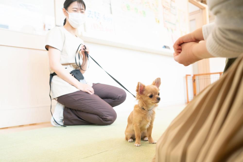 動物病院でパピークラスを行う理由