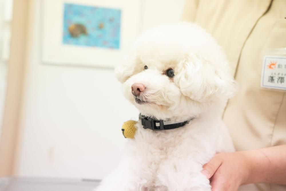 狂犬病 法律 ジスンテンパー パルボ アデノ1 呼吸器 レプト