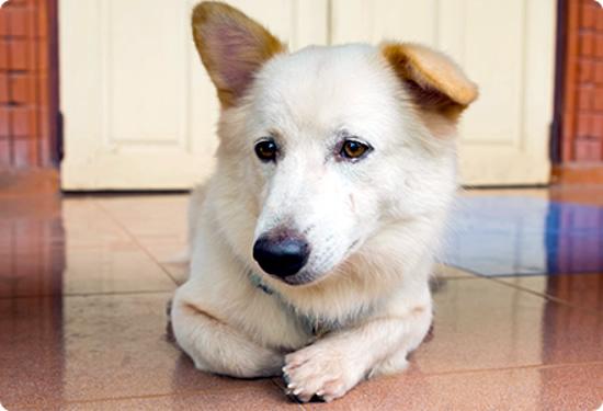 犬、神経科(内科・外科)循環器科